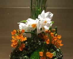 白とオレンジのお花