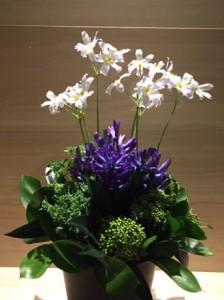 白と紫のお花