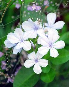 831お花